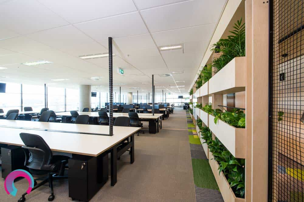 Green plants used as a natural room divider in this commercial office interior. Rows of desks and chairs with natural light on one side and plants on the other